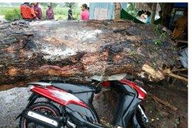 Pohon Tumbang Timpa Warung dan Motor di Magetan