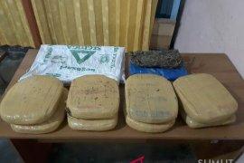 Polres Madina amankan delapan bal ganja kering di Desa Salambue