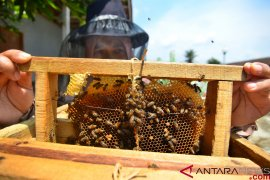 Budidaya madu lebah dan klanceng