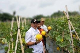 Pemkab Tangerang gencar sosialisasikan menjaga ketahanan pangan