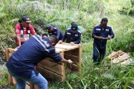 BKSDA Maluku lepasliarkan rusa timor ke pulau Seram