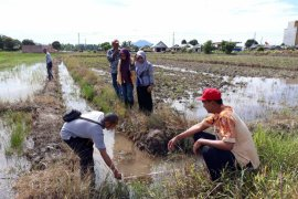 Tanah Bumbu to builds irrigation to increase agricultural yield