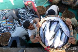 PPS Kutaraja Banda Aceh daratkan ikan puluhan ton/hari