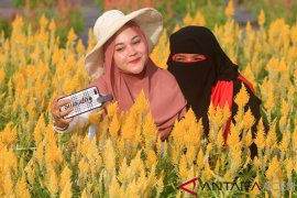 Taman bunga jadi wisata menarik di Aceh Jaya