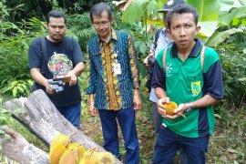 FKH Balangan berkiprah selamatkan buah langka