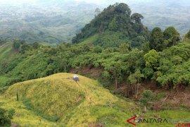 Tradisi Padi Halus, Bercocok Tanam di Ketinggian 800 mdpl (FOTO)