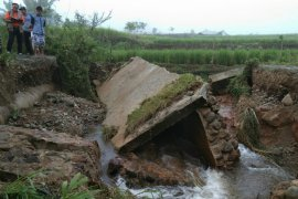 4,25 hektare tanaman padi  di Banjir Solok  Selatan puso akibat banjir