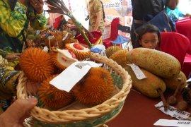 150 jenis buah endemik Kalimantan terancam punah