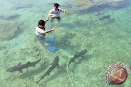 Kanada larang ekspor impor sirip hiu