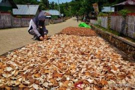 Petani Ponelo Kepulauan Harap Harga Kopra Kembali Naik
