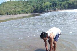 Lumba-lumba Jantan Terdampar di Pantai Serang-Blitar