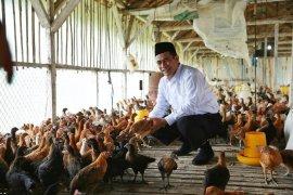Mentan: satu juta ekor ayam untuk santri seluruh indonesia
