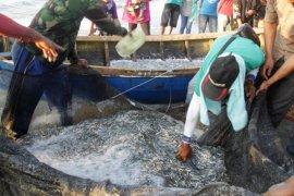 Kehidupan nelayan teri Medan semakin sulit