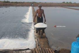 Garam Petani Probolinggo Dijual ke Luar Daerah