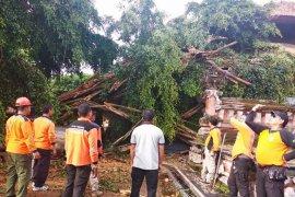 Beringin tumbang timpa wantilan rumah jabatan Gubernur Bali
