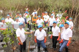 Pertamina-Pemkot Tanam 5.000 Bibit Mangrove di Gunung Anyar Surabaya