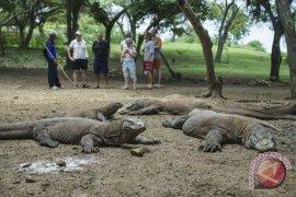 Investor AS ingin kerja sama kelola Pulau Komodo