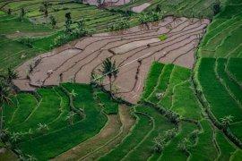 Setahun Jokowi-Ma'ruf, perlu benahi data pangan Indonesia
