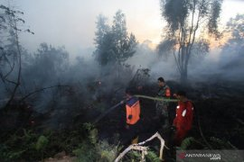 Jikalahari: titik panas terdeteksi di 13 area perusahaan di Riau