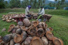 DPRD Harap Pemda Berinovasi Dorong Produksi Kopra