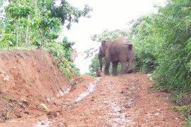 Kawanan Gajah Liar Page 3 Small