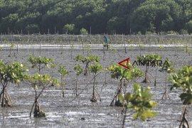 Penyusutan hutan mangrove