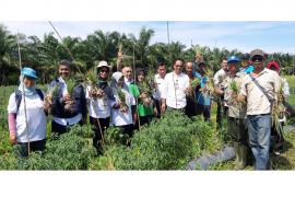 Kelompok Tani Sido Mulyo panen bawang merah di lahan gambut