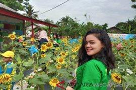 """Taman Bunga Matahari"" objek wisata baru di Bekasi"