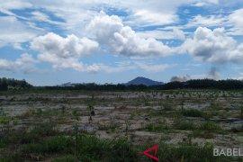 Pemkab Bangka kesulitan lahan bekas tambang kembangkan pertanian
