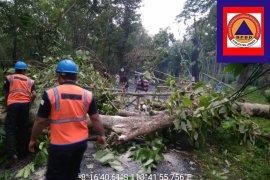BPBD Jember: 10 Kecamatan Terdampak Angin Kencang dan Puting Beliung