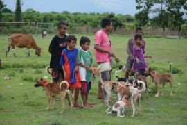 825 NTB residents bitten by dogs