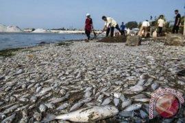 """Pemerintah: """"kondisi iklim ekstrem"""" sebabkan kematian ikan di Australia"""