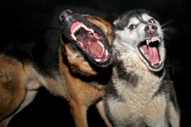 Ratusan warga NTB digigit anjing