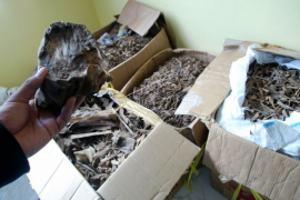 Polisi ungkap pemilik 20 ton gaharu Kapuas Hulu