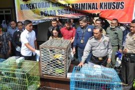 Sumut jadi daerah transit perdagangan satwa liar di Indonesia