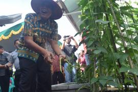 Bupati Sintang panen perdana hasil kebun di Desa Baning