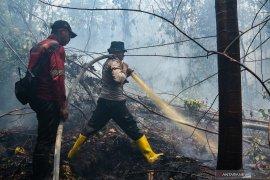 20 kebakaran hutan dan lahan terjadi di Bengkalis, Riau selama Mei