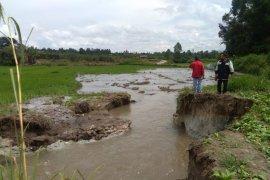Seratusan hektare sawah terdampak tanggul jebol di Siborongborong