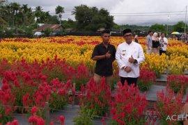 Pemkab Aceh Jaya kembangkan taman  Bunga Celocia di Panga