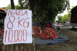 Harga Buah Naga di Probolinggo Jelang Imlek Turun