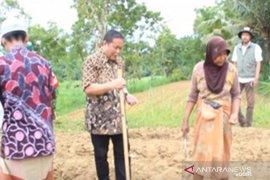 Kementan alokasikan Rp42 miliar untuk petani Pamekasan