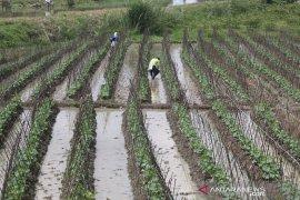 70 persen masyarakat Karawang masih bergantung sektor pertanian