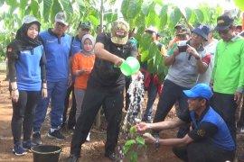 Dishut kembali tanam 1.500 pohon khas Kalimantan