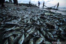 Penggunaan alat tangkap ikan harus terapkan teknologi ramah lingkungan
