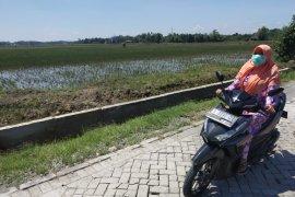 Sebagian Petani di Trucuk Bojonegoro Tidak Ikut AUTP