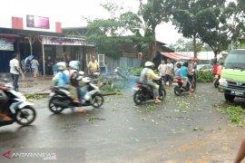 Hujan badai, seorang warga tewas tertimpa pohon di Bumi Ayu
