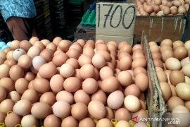 Harga daging ayam di Pontianak kembali normal