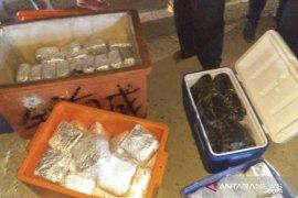 100 Kg Sabu-Ekstasi Dalam Kotak Ikan Diamankan BNN