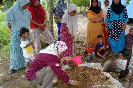 Wanita Tani di HST kembangkan pertanian organik