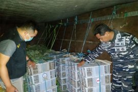 Ribuan burung selundupan dari Lombok-Bali disita petugas BKSDA-TNI AL